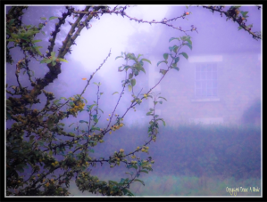16092014 073837 Misty morning