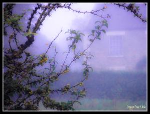 16092014 073837 Misty morning