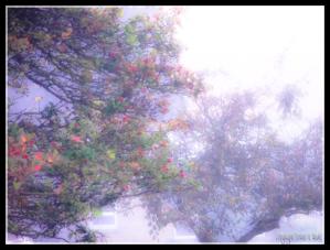 16092014 074129 Misty morning