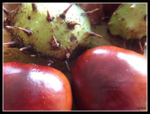 28092014 104231 conkers with c