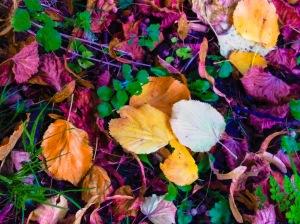 PICT1580_edited autumn