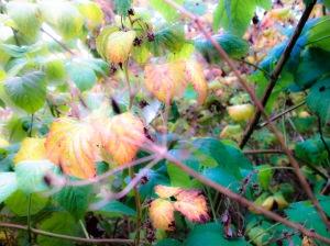 PICT1622_edited autumn dream