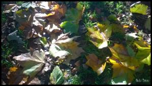 2014-30-10--12-49-53 leaves c