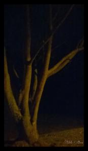 Illuminated tree trunks.