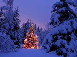 Photo credit: Seasonchristmas.com