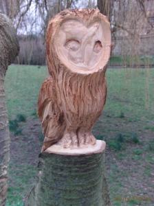 Owl beaver