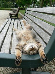 blogpost sunbathing 2